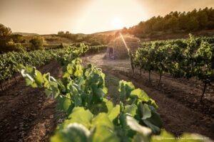 Na jaře jsou nejkrásnější! Pět tipů na české i zahraniční vinařské destinace