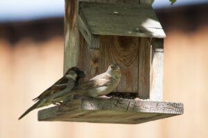 Jak vyrobit ptačí budku? Víme jak na to!