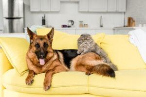Užitečné tipy na úklid pro majitele zvířecích mazlíčků